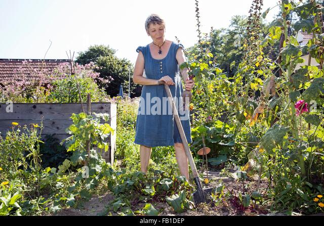 Mature woman gardening, digging with spade, holding vegetable in hand - Stock Image