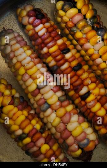 Boil Indian corn - Stock Image