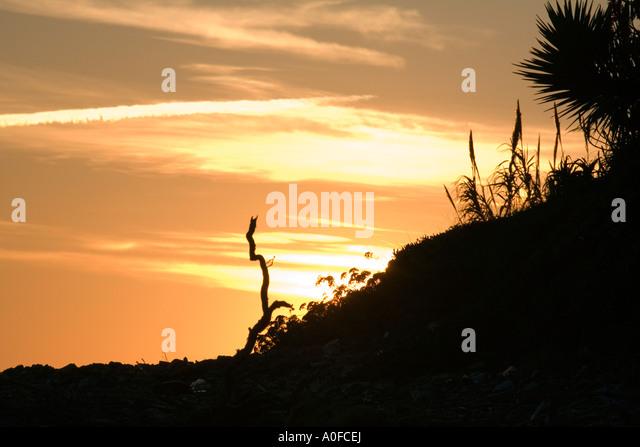 Mediterranean sunset palm fond dusk - Stock Image