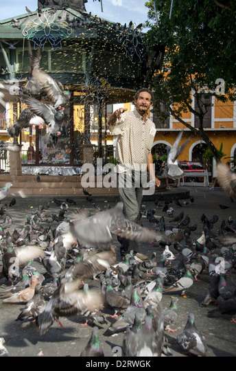 Man feeding pigeons in the Plaza de Armas in colonial city of Old San Juan, Puerto Rico - Stock Image