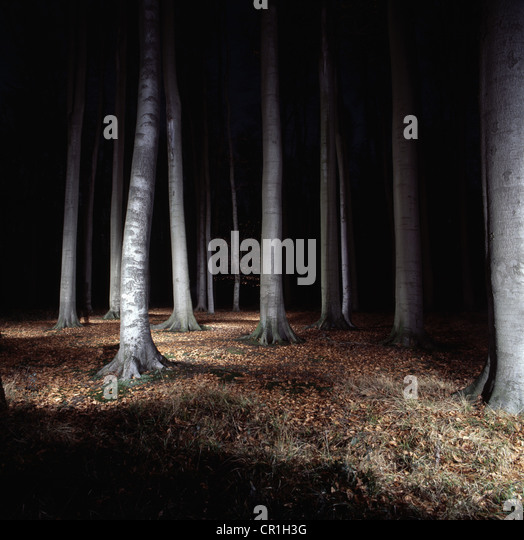 Trees in forest lit up at night - Stock-Bilder