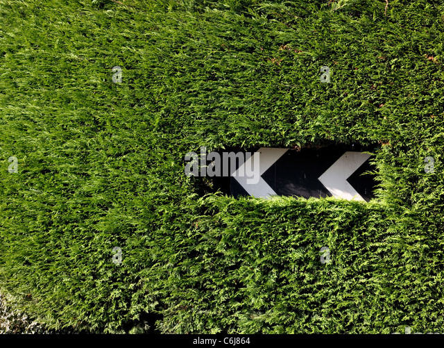 Chevron road sign indicating a left hand corner, cut into a conifer hedge - Stock Image