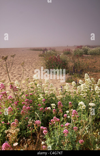 beach with flowers - Stock-Bilder