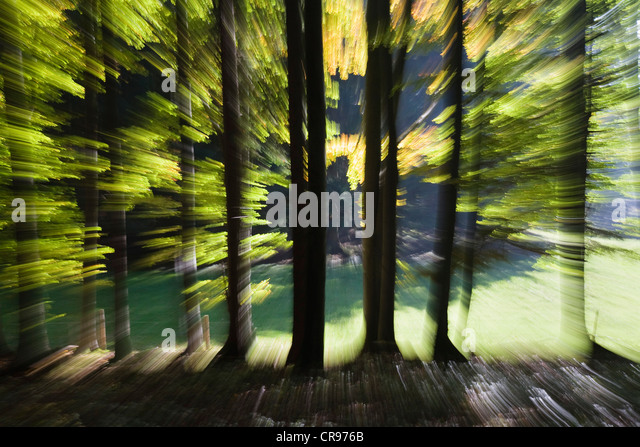 Forest-impression in autumn, Germany, Europe - Stock Image