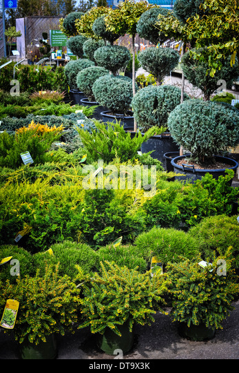 Shrubs in pots stock photos shrubs in pots stock images for Small garden trees for sale