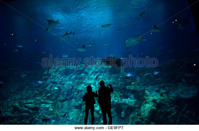 Aquarium in Warsaw City Zoo : stand in front of a giant aquarium at its opening in Aqua City ...