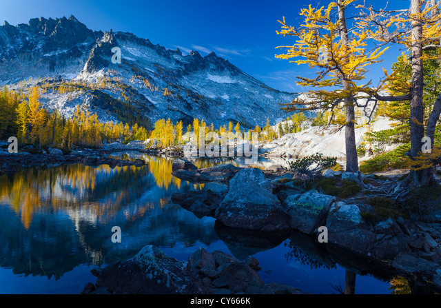Tamaracks reflecting in Lake Leprechaun in Washington's Enchantment Lakes wilderness area - Stock Image