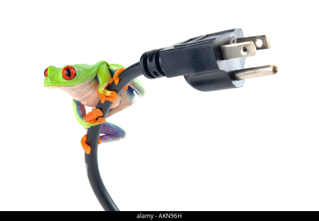 Red Eyed Tree Frog on electrical cord - Stock Image
