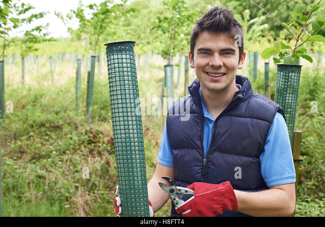 Forestry Worker Caring For Young Trees - Stock Image