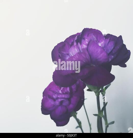 Purple Flowers - Stock Image