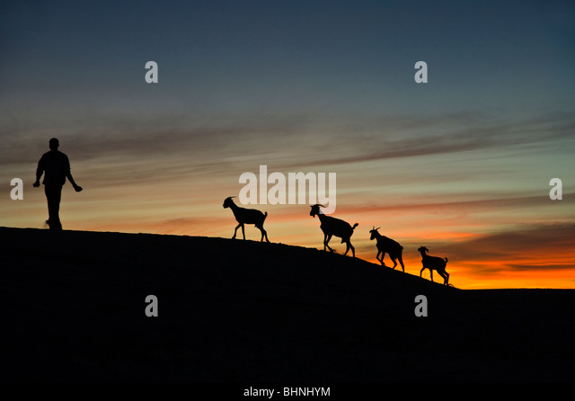 Silhouette of four goats and goatherd, against deep orange sunset sky in the Sahara Desert - Stock Image