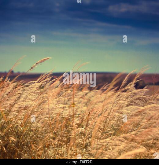 Close-up of wild grass - Stock-Bilder