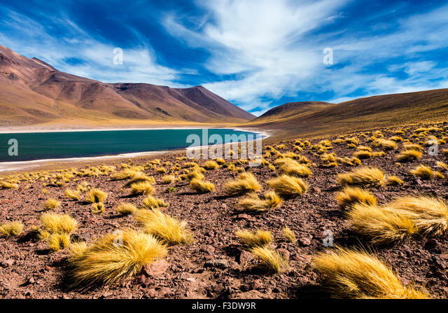 The Meniquez Lagoon in the Atacama Desert, Chile, 2013 - Stock Image