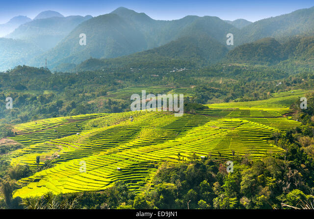 Golo Cador rice paddies near Ruteng, Flores island, Indonesia. - Stock Image