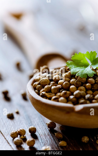 closeup of coriander seeed - Stock Image