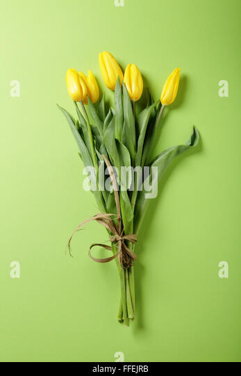 fresh yellow tulip on green background, flowers - Stock-Bilder