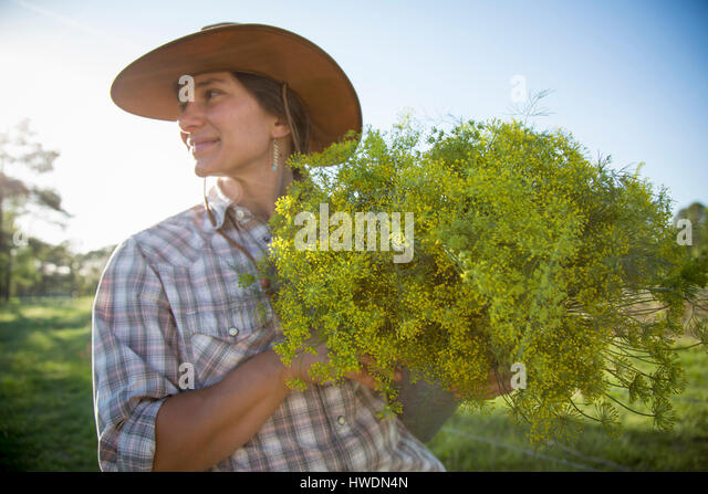 Young woman holding bunch of flowering dill (anethum graveolens) from flower farm field - Stock-Bilder