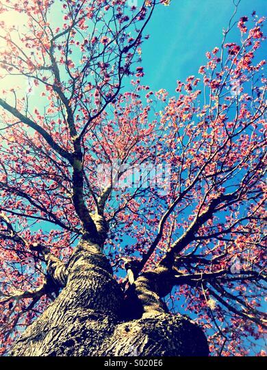 Spring Tree - Stock Image