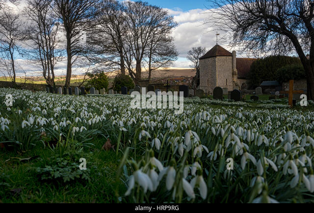 A sea of snowdrops in the burial ground of St Wulfran's, an 11th-century church in the South Downs village of - Stock Image