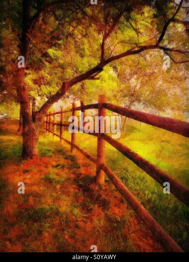 Along the Fence on an Autumn Day - Stock Image