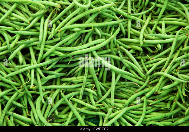 Organic Green Beans - Stock Image