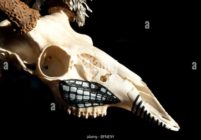 animal skull on black background with native painted symbols on it - Stock-Bilder