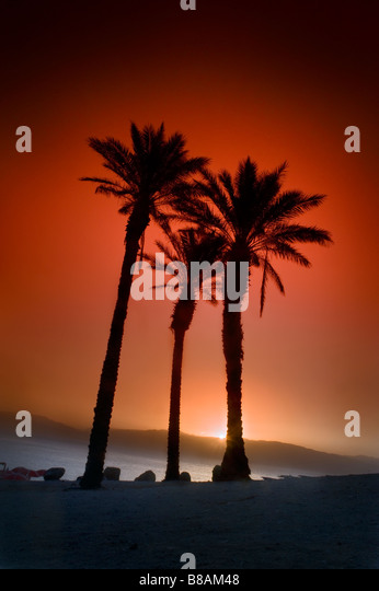 three palms at sunrise in the dead sea Israel - Stock Image