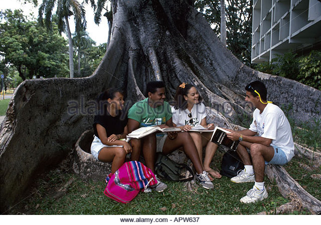 Puerto Rico San Juan University students campus large tree trunk - Stock Image
