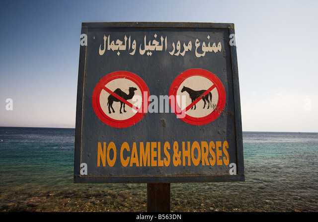 No camels and horses sign on Masbat seafront in Asilah,  Dahab by the Gulf of Aqaba, South Sinai Peninsula, Egypt. - Stock Image