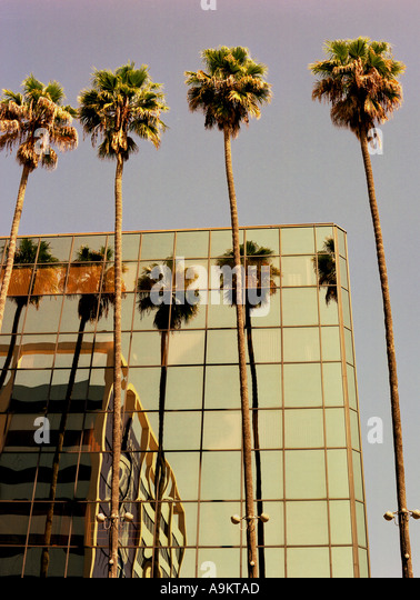 Palm reflections on Hollywood Boulevard Los Angeles - Stock Image