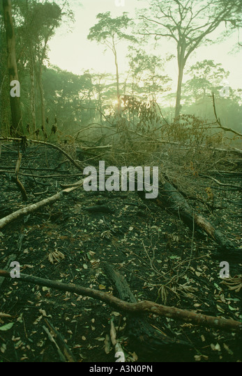 Recently burned slash and burn field Ivory Coast West Africa - Stock Image