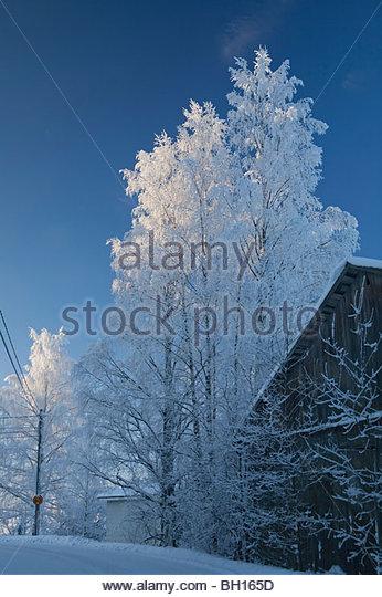 Barn tree snow stock photos barn tree snow stock images alamy for Pine garden exeter nh