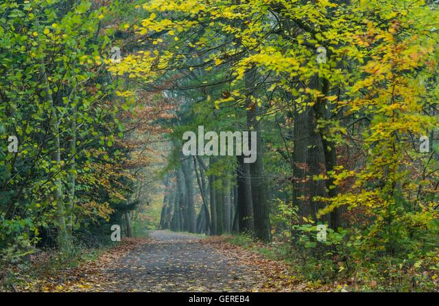 Fuechteler Wald bei Gut Welpe, Vechta, Niedersachsen, Deutschland, Füchteler Wald - Stock Image