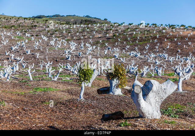 Protecting trees stock photos protecting trees stock images alamy - Protecting fruit trees in winter ...