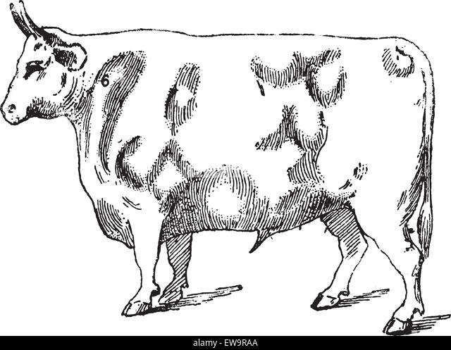 cuts of beef illustration stock photos  u0026 cuts of beef illustration stock images