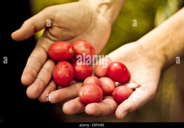 Hands holding plums - Stock-Bilder
