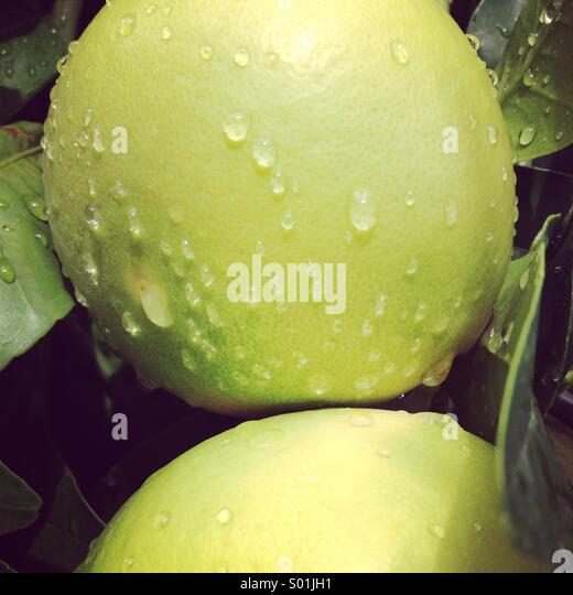 Lemons close up - Stock Image