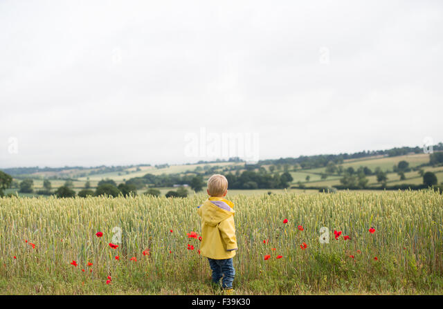 Rear view of a boy standing in a wheat field with poppies - Stock Image