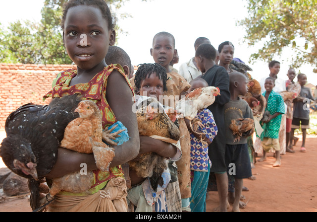 Children bring their chickens to a community vaccination day in Nampikika Village, Iganga District, Eastern Uganda, - Stock Image