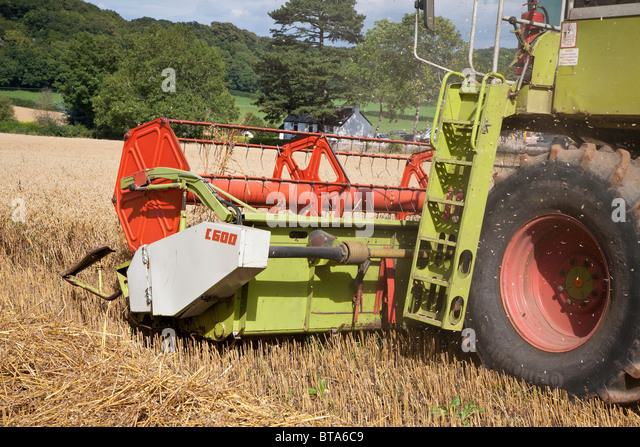 COMBINE HARVESTER HARVESTING OATS - Stock Image