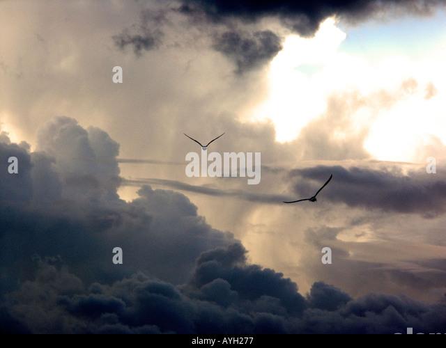Seagulls at  Sunset seagull, seagulls, gull, gulls, dusk, cloud, cloudy, sky, sunset, bird, evening, late, sundown, - Stock Image