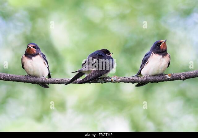 Three black crows sat on a tree