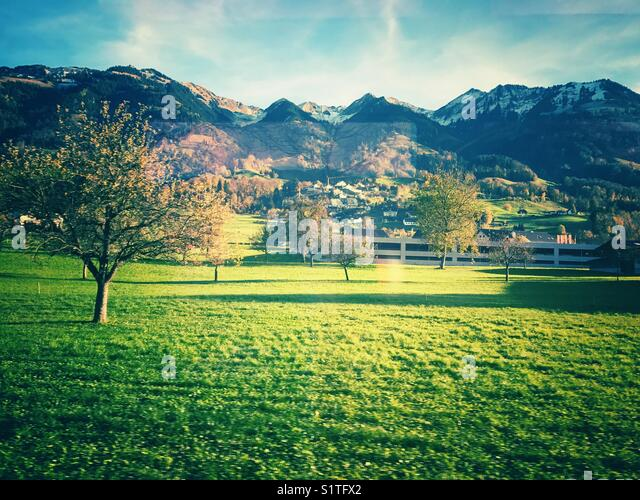 Green trees on field and mountain in Switzerland - Stock Image