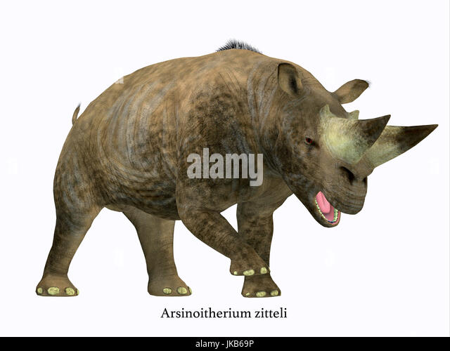 Arsinoitherium was a herbivorous rhinoceros-like mammal that lived in Africa in the Early Oligocene Period. - Stock Image