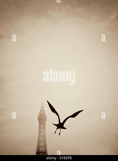 Seagull flying in front of a mist shrouded Blackpool Tower - Stock-Bilder