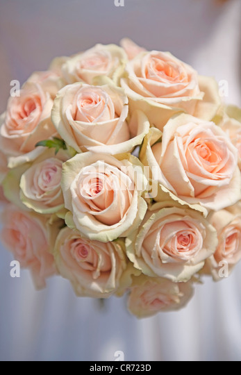 Germany, Bride holding rose bouquet - Stock Image
