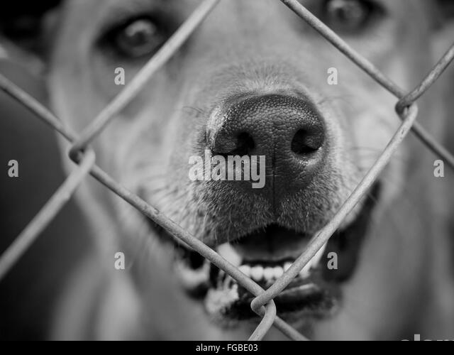 Portrait Of Dog Seen Through Chainlink Fence - Stock Image