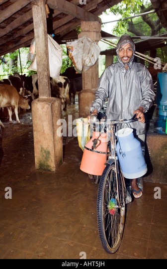 Daily doorstep delivery by a local milkman who travels his milk route carrying bulk quantities in containers on - Stock Image