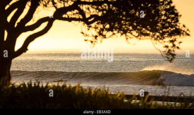 USA, California, Los Angeles County, Malibu, View of tree and seascape at sunset - Stock-Bilder
