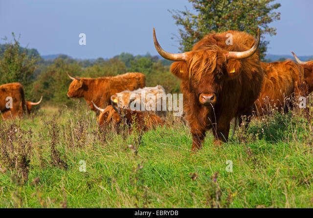 Open Rangeland Stock Photos & Open Rangeland Stock Images ...